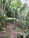 Path through forest 3 - Helmeted Curassow Reserve / RNA Pauxi Pauxi