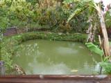 The garden 2 at Helmeted Curassow Reserve / RNA Pauxi Pauxi