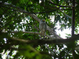 Riverside Hawk 2