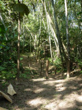 Riverside Trail at Blue-billed Curassow Reserve / RNA El Paujil