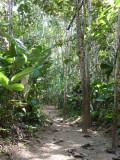 Riverside Trail Blue-billed Curassow Reserve / RNA El Paujil