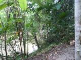 Riverside Trail -  Blue-billed Curassow Reserve / RNA El Paujil