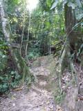Climbing up to Sendero Lomo Patico - Blue-billed Curassow Reserve / RNA El Paujil