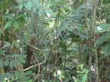 Along Sendero Lomo Patico, Blue-billed Curassow Reserve / RNA El Paujil
