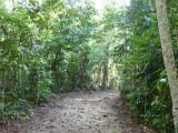 Trail A? Blue-billed Curassow Reserve / RNA El Paujil