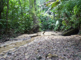 Riverbed along trail A, Blue-billed Curassow Reserve / RNA El Paujil