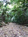 Riverbed along trail A, Blue-billed Curassow Reserve / RNA El Paujil