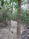 Trail A -  Blue-billed Curassow Reserve / RNA El Paujil