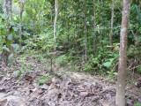 Trail A, Blue-billed Curassow Reserve / RNA El Paujil