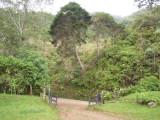 Garden at Chestnut-capped Piha Reserve / RNA Arrierito Antioqueno