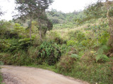 View from the road, Chestnut-capped Piha Reserve / RNA Arrierito Antioqueno
