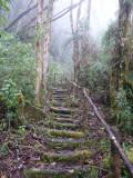 Steps up to Paramo, Dusky Starfrontlet Reserve/ RNA Colibri del Sol