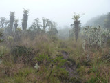 Alien Landscape of Paramo 2, Dusky Starfrontlet Reserve/ RNA Colibri del Sol