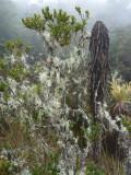 Paramo plantlife, Dusky Starfrontlet Reserve/ RNA Colibri del Sol