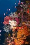 _Reef Scene