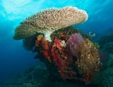 Coral Cornucopia
