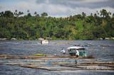 Sampaloc Lake D700_15426 copy.jpg