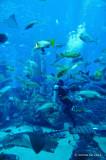 Atlantis, Dubai D300_27430 copy.jpg