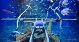 Atlantis, Dubai D300_27446 copy.jpg