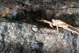 Hidden Crab