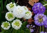 Du printemps / Of Spring