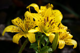 Petit bouquet / Small Bouquet