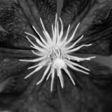 Coeur de fleur / Flower's Heart