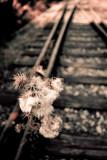 Sur la voie... / On the Way...