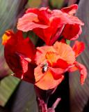 Fleurs et plantes / Flowers and Plants 2011