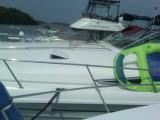 JPG CS 1 Raftup IMG-20110813-00057.jpg