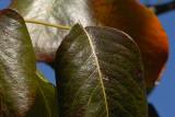 D20_9701-crop.jpg