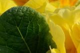 D8H_1104-crop.jpg