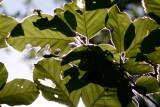 D8E_4067-crop.jpg