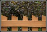 Fence Pattern