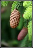Hanging Pine Cone_web.jpg