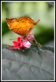 Lunchtime for a Butterfly