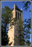 Campanile Hidden in the Trees