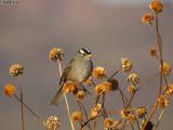 southwestern_usa_birds
