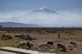 Grazing sheep and their herder, Orizaba looms above.