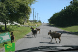Sharing the Road in St. Johns
