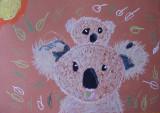 koala, Angel, age:6
