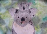 koala, William, age:9.5