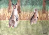 kangaroo, Yiwen, age:12