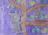 koala, Kyden, age:4.5