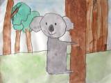 koala, Lucas, age:4.5