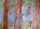 koala, Stanley Xu, age:6