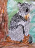 koala, Benson, age:6.5
