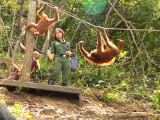 Feeding the Orangutans