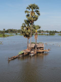 THERE RICE FIELDS ARE FLOODED DUE TO THE MONSOON