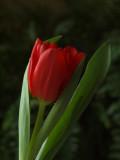 FLOWERS 2012